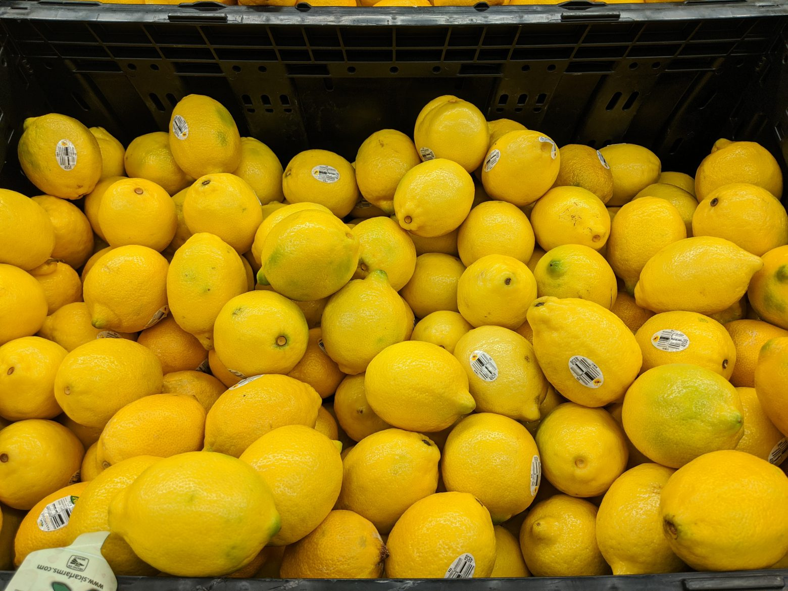 Citrus: Fresh, Plastic or Glass